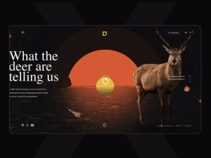 The Best Web Design Trends for 2021 18